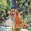 Пазл: Купающийся тигр (Cat in the lake puzzle)