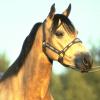 Пазл: Лошади (Horse Jigsaw)