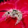 Пазл: Пауки (Spider Jigsaw)