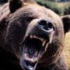 Пазл: Медведи (Bear Jigsaw)