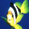 Пазл: Тропические птички (Tropical Fish Jigsaw)