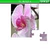 Пазл: Цветы 4 (Flowers 4)