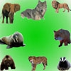 Звуки животных 7 (Sounds Part 7. Pet Sounds Part 4/Звуки часть 7. Звуки животных.)