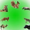 Звуки животных 6 (Sounds Part 6. Pet Sounds Part 3/Звуки часть 6. Звуки животных)