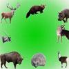 Звуки домашних животных 2 (Sounds Part 5. Pet Sounds Part 2/ Звуки домашних животных)