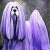 Пятнашки: Необычная собачка (Purple haired dog slide puzzle)