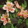 Пазл: Цветы 2 (Jigsaw: New flowers)