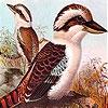 Пазл: Обиженные птички (Two offended bird puzzle)