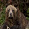 Пятнашки: Гризли (Grizzly Bear Slider)