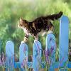 Пятнашки: Котик на заборе (Cat Slide Puzzle)