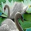 Поиск чисел: Лебеди (Fabulous swans hidden numbers)