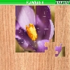Пазл: Цветы 6 (Flowers 6)