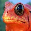 Пятнашки: Лягушка (Frog Slide Puzzle)
