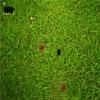 Войны муравьев (Ant Warz)