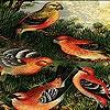 Пазл: Фантастические птицы (Fantastic birds puzzle)