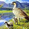 Пятнашки: Утка с утятами (Ducks and rainbow slide puzzle)