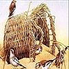 Пятнашки: Птички у корзинки (Birds in the bush slide puzzle)