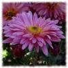Пазл: Чудесные цветы (Jigsaw: Beautiful flowers)