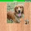 Пазл: Собака (Dogs)