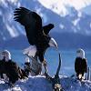 Пятнашки: Орел (Eagle Slide Puzzle)