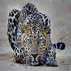 Пятнашки: Леопард (Leopard Slide Puzzle)