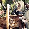 Пазл: Птички (Thirsty birds puzzle)