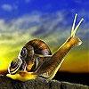 Пятнашки: Улитка (Prying snail slide puzzle)