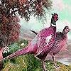 Пятнашки: Лесные птицы (Pink forest birds slide puzzle)