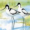 Пятнашки: Птички (Two tiro bird slide puzzle)