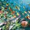 Пятнашки: Вереница рыбок (Fish Swirls Slider)