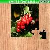 Пазл: Фрукты и овощи 14 (Fruits and vegetables 14)