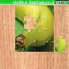 Пазл: Фрукты и овощи 18 (Fruits and vegetables 18)