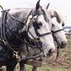 Пятнашки: Лошадки (Horse Sliding Puzzle)