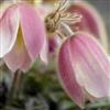 Пазл: Цветы (Flower Jigsaw)