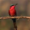 Пятнашки: Птичка (Birds Sliding Puzzle)