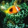 Пазл: Тропические рыбки (Tropical Fish Sliding Puzzle)