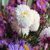 Пазл: Хризантемы (Jigsaw: Chrysanthemum)