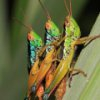 Пятнашки: Кузнечики (Grasshoppers Slider)