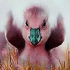 Пятнашки: Утенок (Pink duck slide puzzle)