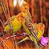 Пятнашки: Попугайчики (Red forest birds slide puzzle)