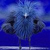 Пятнашки: Робкая птичка (Timid blue bird slide puzzle)