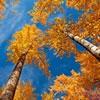 Пазл: Осень в России (Russian Autumn)