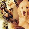 Пятнашки: Собачка и птичка (White dog and bird slide puzzle)