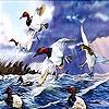 Пятнашки: Птицы (Bevy on the sea slide puzzle)