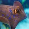 Пазл: Морские создания (Great Fish Jigsaw)