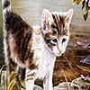 Поиск чисел: Котята (Melancholic cats hidden numbers)