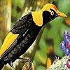Поиск чисел: Забавные птички (Crazy birds hidden numbers)
