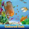 Поиск предметов: Цветные рыбки (Colored fish 5 Differences)