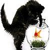 Пятнашки: Черный котенок (Naughty black cat slide puzzle)