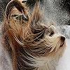 Пазл: Собака и снег (Snow and dog puzzle)